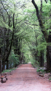 Laan naar natuurbegraafplaats Heidepol