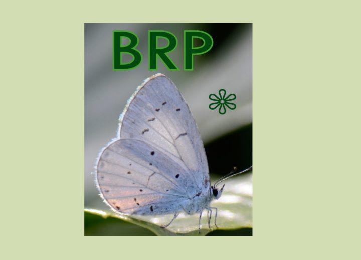 Wijziging Basisregistratie Persoonsgegevens (BRP)
