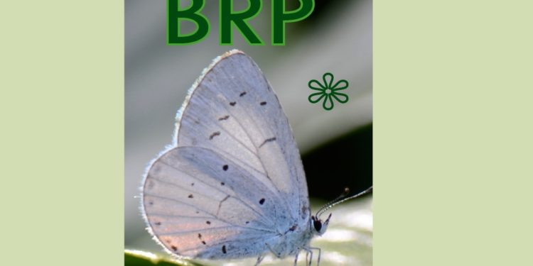 Blog over wijziging Basisregistratie Persoonsgegevens (BRP)